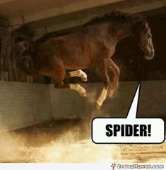 91bfec3d Quinsta] New Breed: Akhal-Teke Funny Horse Pictures, Funny Horse Quotes,