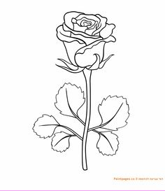 דף צביעה ורד