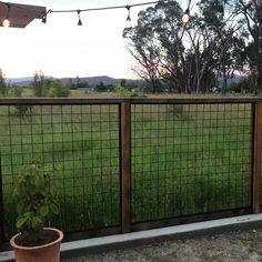 Fencing DIY Welded Mesh Stair/Fence Rail Panels by Wild Hog Railing - DecksDirect Article Physique: Hog Wire Fence, Chicken Wire Fence, Welded Wire Fence, Metal Fence, Horse Fence, Bamboo Fence, Fence Stain, Pallet Fence, Diy Fence