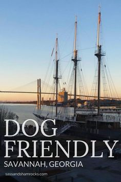 Finding dog friendly activities can be very difficult. In fact a lot of people will tell you that having a human puppy is a heck of a lot more convenient. Savannah Restaurants, Downtown Savannah, Visit Savannah, Savannah Chat, Savannah Georgia, Dog Friendly Hotels, Pet Friendly Accommodation, Dog Travel, Travel Usa