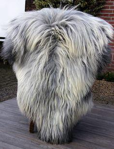 Schapenvacht grijs langharig schapenvel nr 01