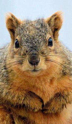Squirrel looking at you looking at him...
