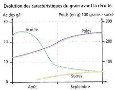 Évolution des caractéristiques du raisin ( sucres, poid, acidité) avant les vendanges
