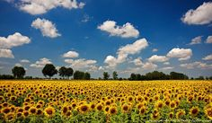 this may not have been taking in Spain.. but it looks like the fields of Girasol's in Andalucia..