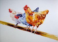 "Hens: ""Perching chickens""   Flickr - Photo Sharing!. FineArtEngland: Debra Hall.  Ebay: greypepper71. Chicken Drawing, Chicken Painting, Chicken Art, Watercolor Paintings Abstract, Watercolor Trees, Watercolor Portraits, Watercolor Landscape, Farm Paintings, Animal Paintings"