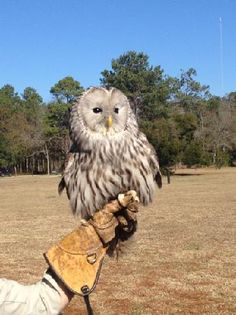 """Avian Conservation:  The Center for Birds of Prey, near Charleston, SC.  """"I have traveled worldwide and seen countless centers and this is the absolute best of its kind I have ever seen anywhere"""" ~ Jack Hanna"""