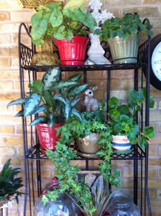 Small potted plants in red and green pots. Small potted plants in red and green pots. Blue Succulents, Hanging Succulents, Succulents Garden, Planting Flowers, Potted Plants Patio, Outdoor Plants, Outdoor Spaces, Succulent Centerpieces, Succulent Terrarium