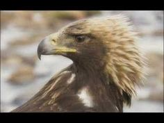 The Eagle Hunters of Mongolia (+playlist)