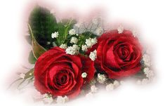 See the stamp red roses deco rouge rose belonging to on PicMix. Good Morning Sister, Beautiful Love Pictures, Happy Birthday Wishes Cards, Amor Quotes, Reflection Quotes, Good Night Greetings, Love Thoughts, Love Phrases, Love Messages