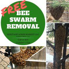 Free bee swarm removal in Pueblo, Colorado