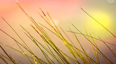 Dreaming In The Grass - Original fine art abstract landscape photography by Bob Orsillo.  Copyright (c)Bob Orsillo / http://orsillo.com - All Rights Reserved.  Buy art online.  Buy photography online