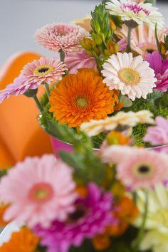Gerbera Jamesonii, Gerbera Daisies, Flower Farm, Perennials, Summer Time, Daisy, Tropical, In This Moment, Nature