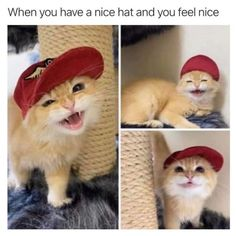 a happy kitten with its hat ⟶ Cat Lover Gifts, Cat Gifts, Cat Lovers, Crazy Cat Lady, Crazy Cats, Kittens Cutest, Cats And Kittens, Happy Kitten, Funny Animals