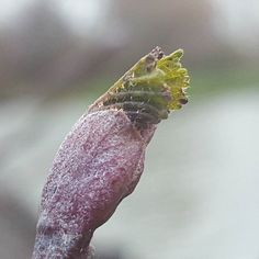 A sign of new growth #richardhandel #photography #winter #spring