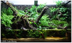 Cool for anything semi aquatic,such as amphibians including frogs, toads, salamanders and newts!