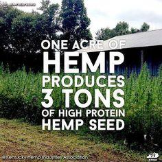 Amazing hemp! http://www.naturalnews.com