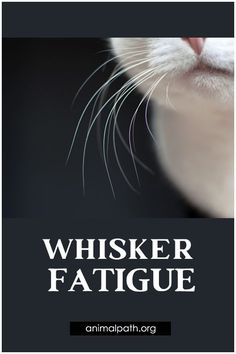 What is whisker fatigue and how to prevent it? Not Drinking Enough Water, Sensory System, Muscle And Nerve, Cat Care Tips, Group Boards, Cat Health, Health And Wellbeing, Dental Care, Health Problems