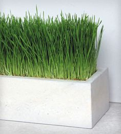 Concrete Box Planter | Roughfusion