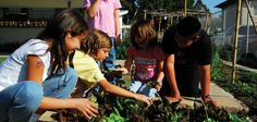 Learn how the #Orlando Junior Academy is making a difference in #health education for #children through #vegetable #gardening
