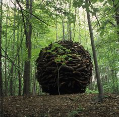 .Andy Goldsworthy