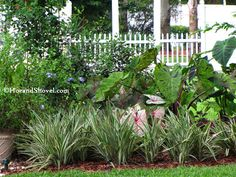 Designing with Florida Natives and Florida-Friendly Plants