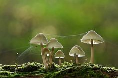 In the forest - fungi and web Slime Mould, Mushroom Fungi, Tiny Mushroom, After Life, Foto Art, Science And Nature, Mother Nature, Planting Flowers, Nature Photography