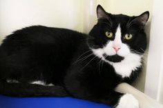 Sylvester has been adopted from Petco in Factoria, a Seattle Humane satellite location. http://www.seattlehumane.org/adoption/cats
