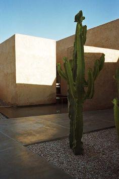 Villa K située dans l'Atlas marocain, architecture Studio KO © Numa Balsan (AD… Architecture Plan, Landscape Architecture, Interior Architecture, Garden Drawing, Indoor Flowers, Desert Homes, Modern Backyard, Desert Plants, Landscape Plans