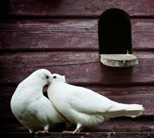 Beautiful doves are given a home in a garden filled with love <3  - pinned by https://www.pinterest.com/sy214/all-creatures-great-small/