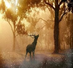 Forest Pictures, Nature Pictures, Celtic Music, Paint By Number Kits, Magical Forest, Red Deer, Animal Wallpaper, Nature Wallpaper, Iphone Wallpaper
