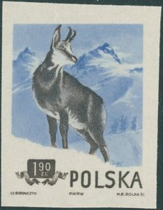 Alpine Chamois (Rupicapra rupicapra) Stamp Collecting, Vintage Posters, Moose Art, World, Stamps, Animals, Collection, Eagles, Countries