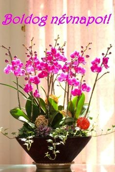 Best Garden Decorations Tips and Tricks You Need to Know - Modern Cymbidium Orchids, Pink Orchids, Amazing Gardens, Beautiful Gardens, Happy Name Day, Orchid Arrangements, Flower Spray, Beautiful Flowers Garden, Diy Garden Decor