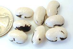 Bean Garden, Bean Varieties, Bean Seeds, Raw Vegetables, Edible Garden, Lentils, Vegetable Garden, Stuffed Mushrooms, Beans