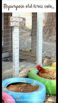 Chicken dust bathing idea