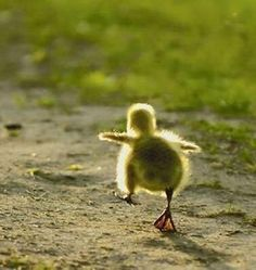 Look, mommy! I could fly and run.