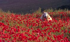Stopping to smell the poppies..........