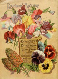 Wm. Elliott & Sons 1894 back cover catalogue