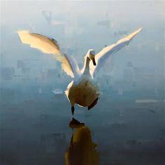 """Whooper Swan"" -  Thorgrimur Andri Einarsson"