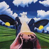 Cow II - Nosey Cow by Eoin O'Connor