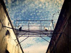 Cats on the bridge