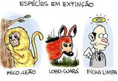 Espécies em extinção...