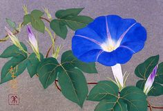 one of the best depictions of  a blue morning glory I've seen..... 朝顔 - Google 検索