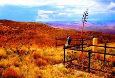 CENTURY. Century plant at old miner's gravesite in Jerome, Arizona. #photography #fine_art #homedecor #arizona