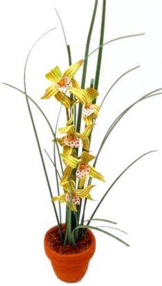 "Orchid ""J"""