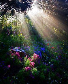 #sunbeams #flowers#garden#gardens#colour #color #colors #colorful#landscape
