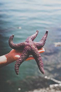 amazing marine sea life
