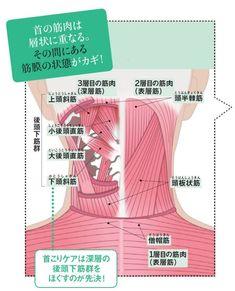 目も腕もつらい「スマホ首こり」 筋膜はがしでほぐす|WOMAN SMART|NIKKEI STYLE Qigong, Trigger Points, Japan Art, Yoga, Pain Relief, How To Stay Healthy, Health And Beauty, Fitness Inspiration, Health Fitness
