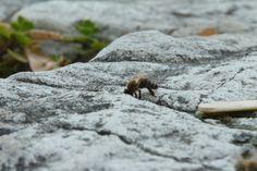 Photo Bee by Denis Gjerek on 500px