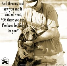 October is Adopt-A-Shelter-Dog Month. When you open your heart to a shelter dog, you just might find something you didn't even know you were looking for. Dog Quotes, Animal Quotes, Animal Memes, Animal Antics, Heart Quotes, Westies, Animal Shelter, Animal Rescue, I Love Dogs