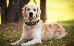 Motorola Scout 5000 Tag For Your Four Legged Friend   Video and Audio of your dog.